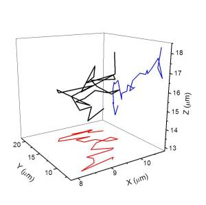 Track of the Brownian motion of a 50 nanometre diameter particle